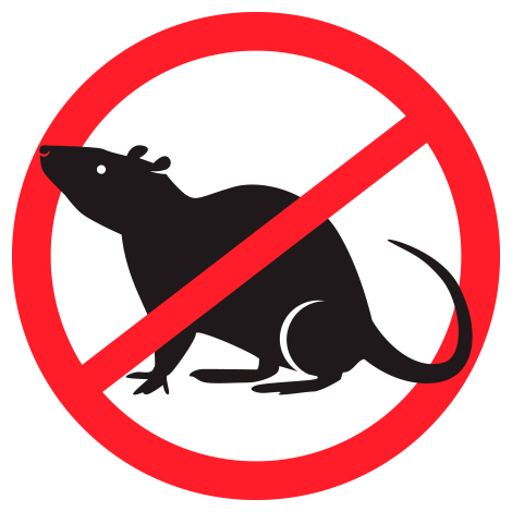 Advice against the invasion of rodents and insects in winter, Exterminateurs Associés, photo