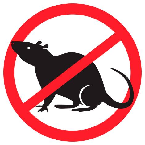 Conseils contre l'invasion de rongeurs et d'insectes en hiver, Exterminateurs Associés, photo