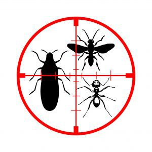Photo, exterminateur d'insectes à Montréal