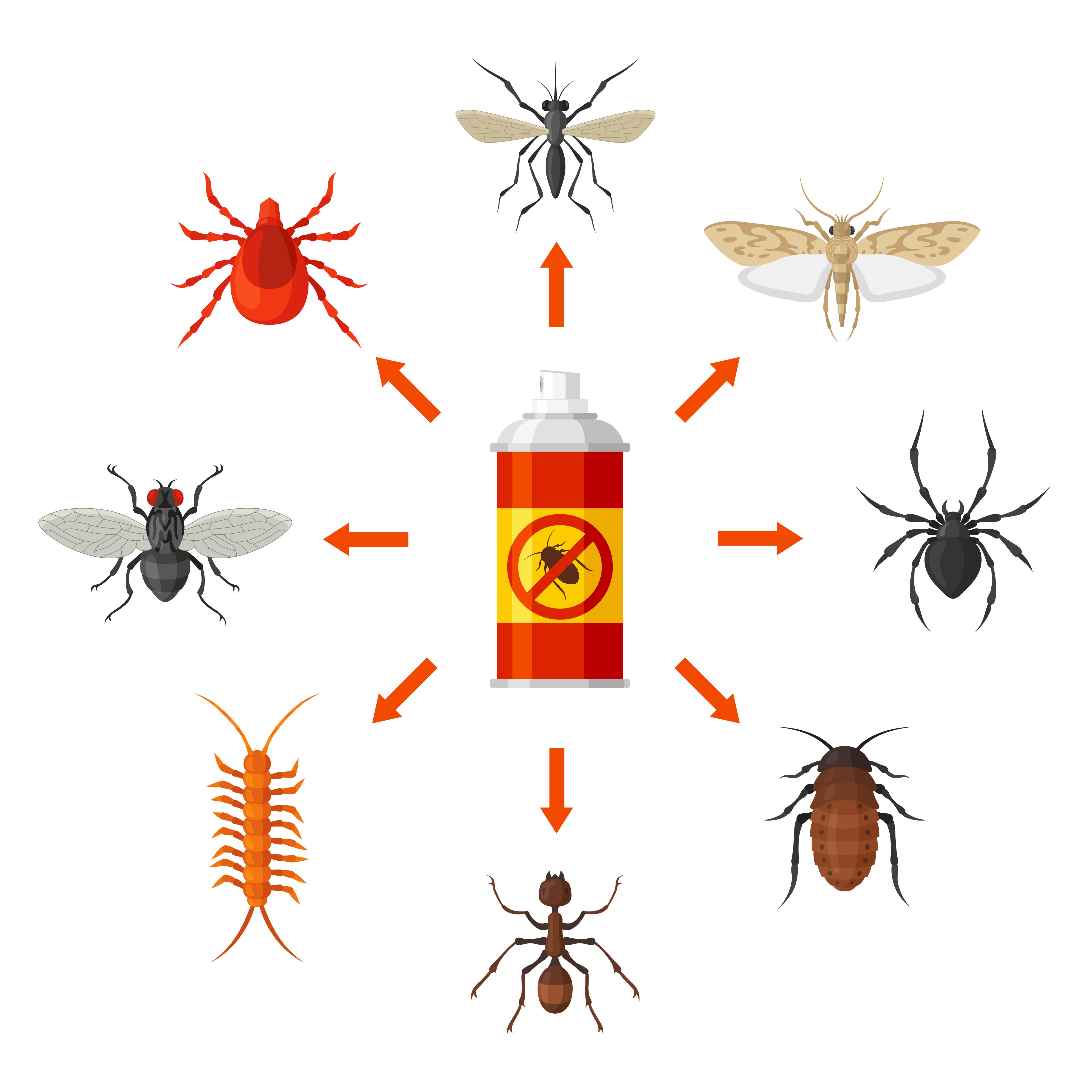 identifier un insecte de maison, Exterminateurs Associés, photo