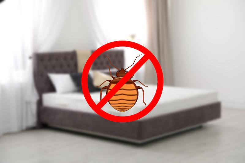 Déménagement punaise de lit, gestion parasitaire à Montréal