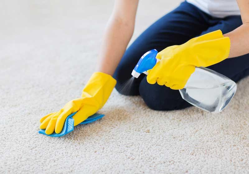 désinfection de la maison quand il y a infestation d'anthrène de tapis